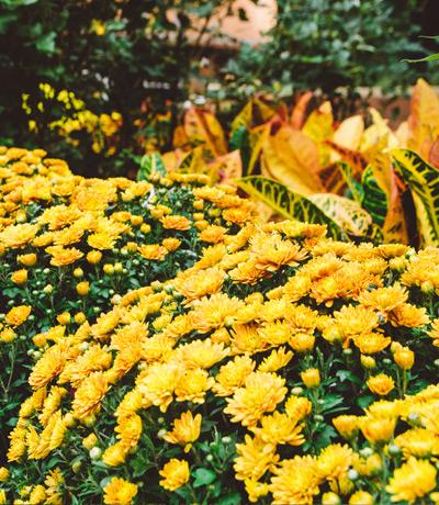 home-seasonal-color