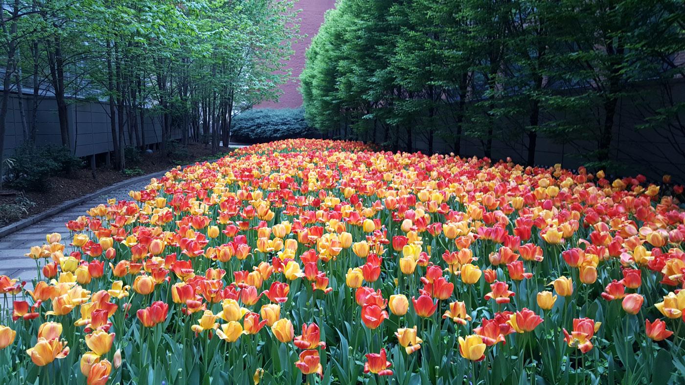 mcnulty-spring-summer-26