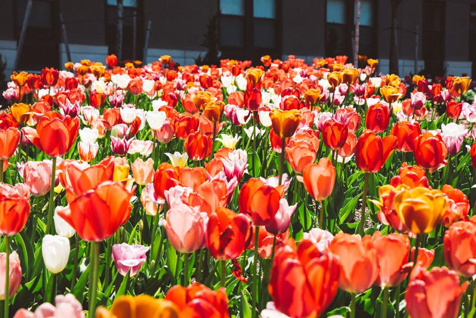 mcnulty-spring-summer-6