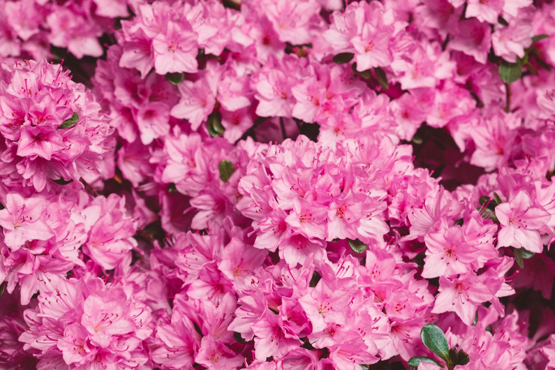 mcnulty-spring-summer-61