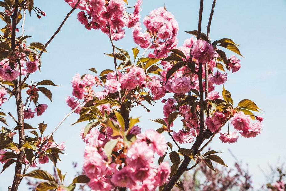 mcnulty-spring-summer-7